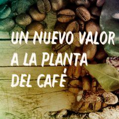INNOVACIÓN SUSTENTABLE: UN NUEVO VALOR A LA PLANTA DEL CAFÉ