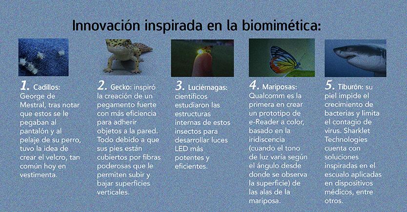Vehículos autónomos visión pájaros